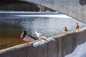 Birds on embarkment.