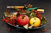 Apples And Dried Bunches Of Rowan.