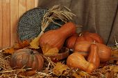 Pumpkins in wooden tub with sheaf and wicker stand on straw on sackcloth background