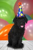 Black Puppy Dog With a Birthday Celebration Theme