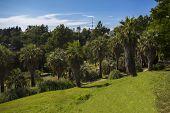 Sunny Palm Tree Park