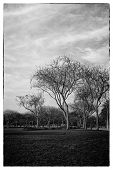 A view of trees in a park - retro effect