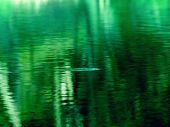 spooky or murky water abstract. Spooky jungle like water surface, right after some small creature ha