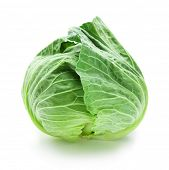 Fresh harvested cabbage with slight water drops for freshness. Isolated on white with natural shadow