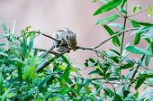 Indian Palm Squirrel Roaming Around In Garden