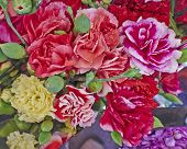 colorful carnation flowers close up