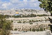 Al-aqsa Panorama Of The Old City