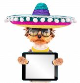 picture of mexican-dog  - cute puppy dog wearing a mexican hat holding blank tablet pc - JPG