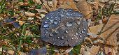 Dew Drops On Fallen Leaves .