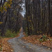 Winding Forest Path In Autumn  Forest.