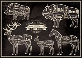 image of deer meat  - vector diagram cut carcasses of boar bison deer horse - JPG