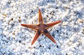 Starfish on beach with natural white marble stones