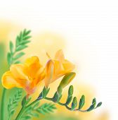 Spring yellow primrose, floral background