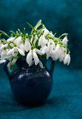 Snowdrops in a blue ceramic vase