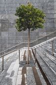 Solitary Tree In The Middle Of A Staircase
