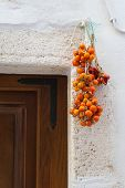 Tomatoes Hanging From Apulia