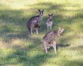 Kangaroo Bust A Move