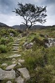 Solitary Tree On Mountain And Footpath Landscape In Summer