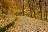 picture of backwoods  - Fallen autumn leaves cover a backwoods country road leading through a forest in Tennessee - JPG