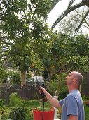 stock photo of pesticide  - Man spraying a tree with pesticide in garden - JPG