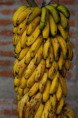 Hang Bananas Group Outdoors