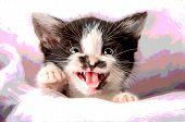 Poster effect Kitten