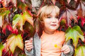 Cute toddler boy having fun outdoors, hiding in ivy leaves