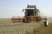 image of threshing  - The big harvesting machine harvest the crop - JPG