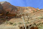 Red rock and canyon landscape in Zion National Park, Utah
