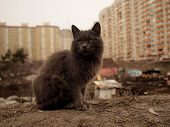 grey cat and shanty and modern city residental background