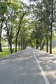 Bicycle Way Road In Green Forest Of A City Park