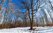 Télvége fényei - Lights of the winter-end