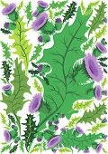 Beautiful Decorative Border Of Thistle Flowers