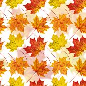 Maple-leaf seamless background