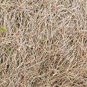 Dried grass fragment