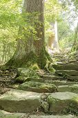 Tree and stone stairway