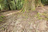 Raised roots tree base