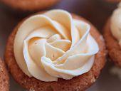 magenta Cup-cake close-up