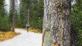 Girl Trekking In The Wood