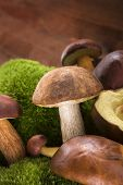 picture of mushroom  - Fresh delicious mushrooms with moss on brown wooden background - JPG