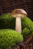 stock photo of mushroom  - Mushroom picking - JPG