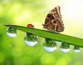 dew drops with butterfly and ladybird