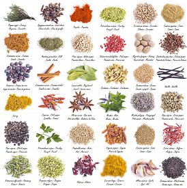 picture of cardamom  - Spices set with a great assortment isolated on a white background and with their scientific names and their names in English Spanish and French - JPG
