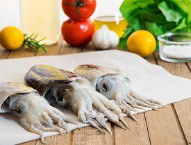 picture of cuttlefish  - Tree fresh cuttlefish - JPG