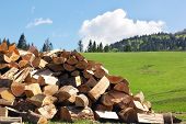 picture of firewood  - sectional drawing stack of firewood on the green grass and forest and blue sky with clouds on the background - JPG