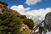 stock photo of dwarf  - View from Loser peak over dwarf pine trees steep rocky wall and summits covered with snow Dead Mountains  - JPG