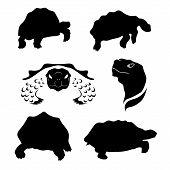image of tortoise  - Tortoise set of silhouettes vector - JPG