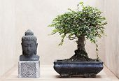 foto of bonsai  - buddha statue beside bonsai tree Zen and meditation concept - JPG