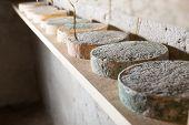 image of basement  - Goat cheese maturing in basement - JPG