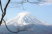 picture of mount fuji  - This is a Mount Fuji and branches of trees - JPG